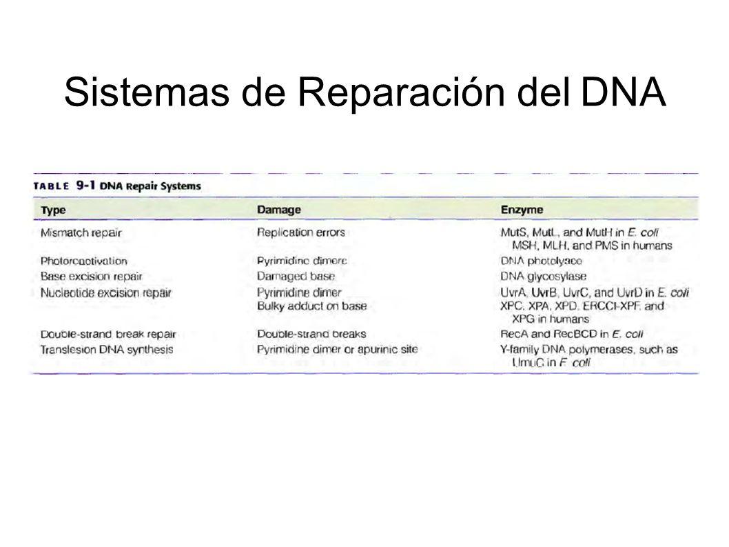 Sistemas de Reparación del DNA