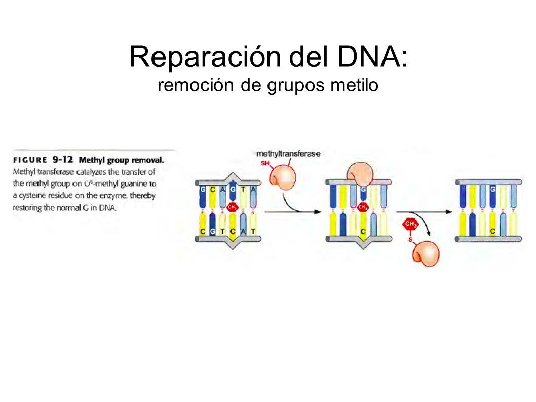 Reparación del DNA: remoción de grupos metilo