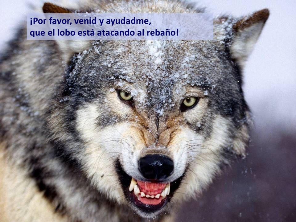 En cierta ocasión, el lobo vino realmente y, entonces, el pastor, muy, muy asustado gritó aterrorizado: