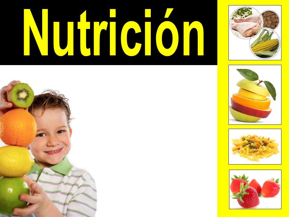 Identificar la función de los alimentos en el organismo.