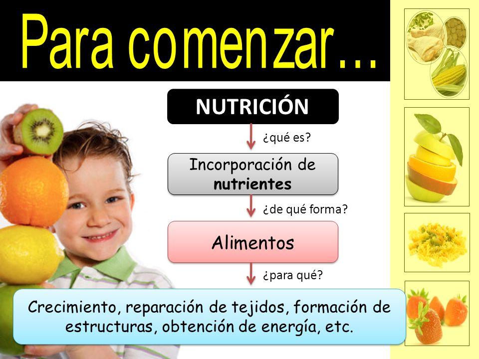 NUTRICIÓN Incorporación de nutrientes Alimentos Crecimiento, reparación de tejidos, formación de estructuras, obtención de energía, etc. ¿qué es? ¿de