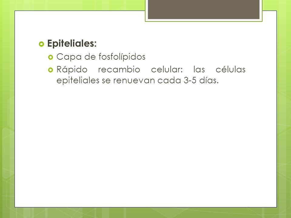 Epiteliales: Capa de fosfolípidos Rápido recambio celular: las células epiteliales se renuevan cada 3-5 días.