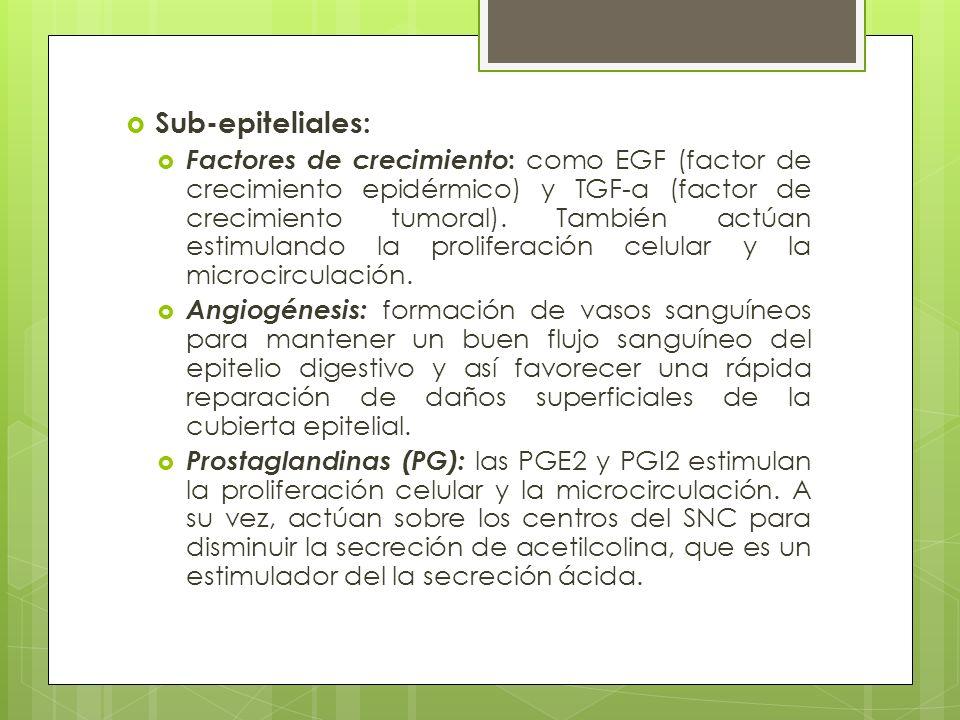 Sub-epiteliales: Factores de crecimiento : como EGF (factor de crecimiento epidérmico) y TGF-α (factor de crecimiento tumoral). También actúan estimul