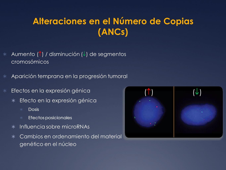 Alteraciones Asociadas a Asénico Citobanda Inicio (Mb) Término (Mb) Tamaño (Mb) Tipo de alteración % de muestras que presentan la alteración Genes 2p11.2- p11.1 91.0291.300.28 60% 7q11.2161.7162,180.47 55.5% 10q11.2348.6950.872.18 80% FAM25C, FAM25B, FAM25G, OGDHL, PARG 19q13.3355.5555.710.15 90% NAPSA, NR1H2, POLD1, SPIB, MYBPC2, LOC112703, LOC284361, JOSD2