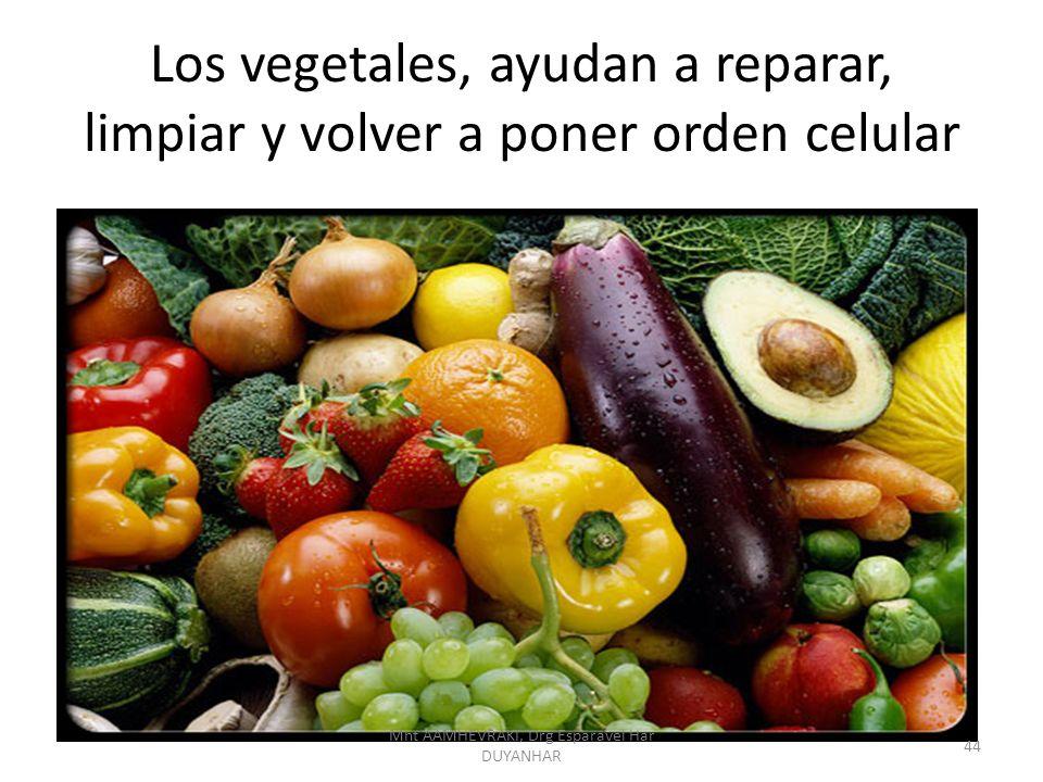 Los vegetales, ayudan a reparar, limpiar y volver a poner orden celular 44 Mht AAMHEVRAKI, Drg Esparavel Har DUYANHAR
