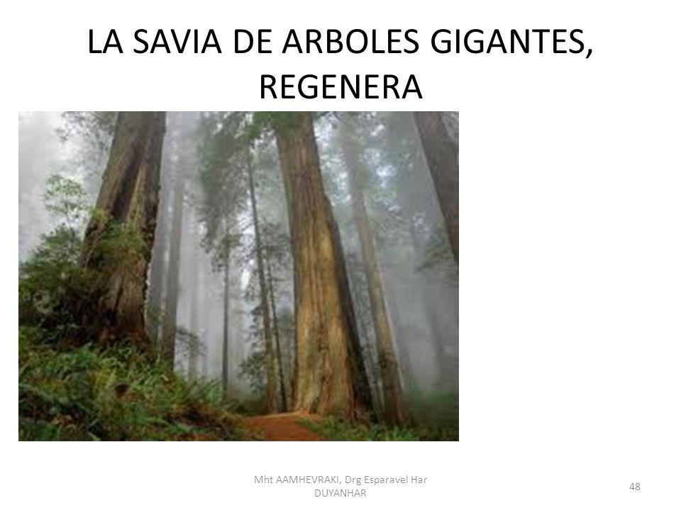 LA SAVIA DE ARBOLES GIGANTES, REGENERA 48 Mht AAMHEVRAKI, Drg Esparavel Har DUYANHAR