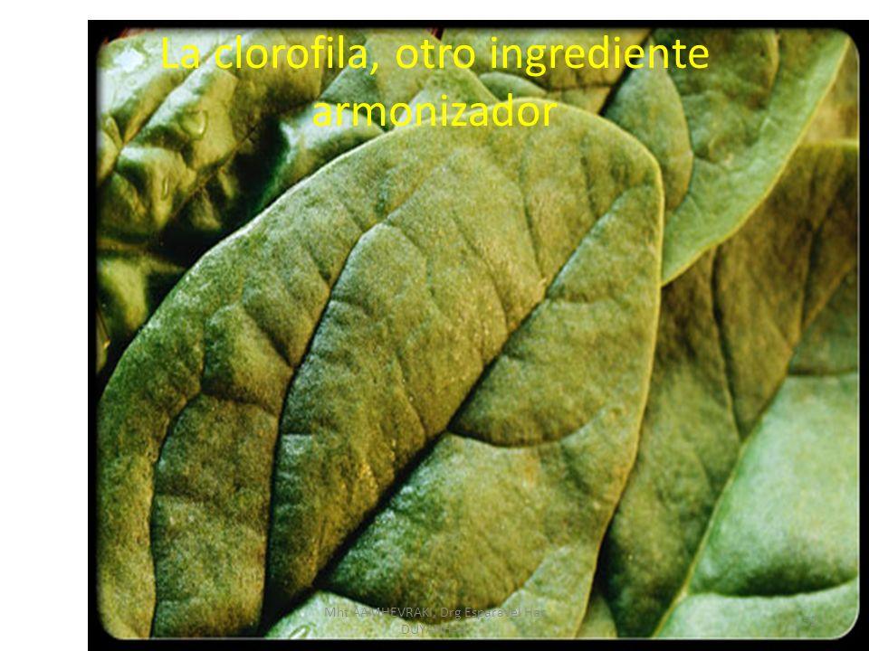 La clorofila, otro ingrediente armonizador 52 Mht AAMHEVRAKI, Drg Esparavel Har DUYANHAR