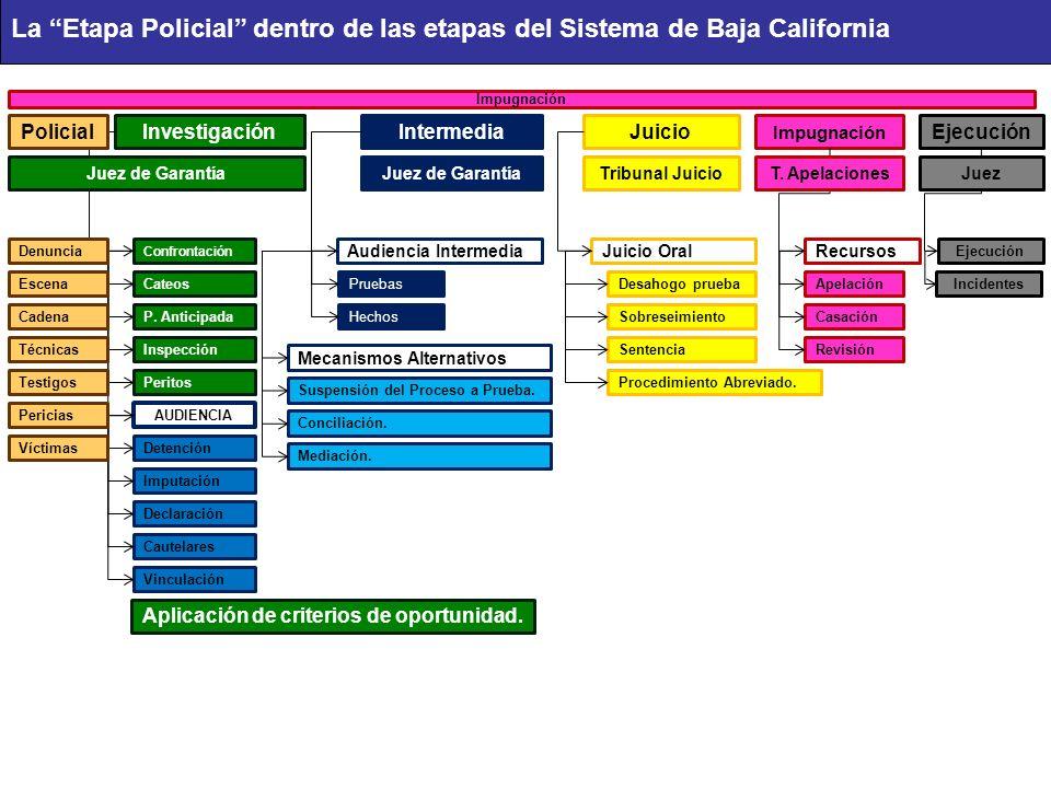 InvestigaciónIntermediaJuicio Impugnación Ejecución Confrontación Audiencia Intermedia Juicio OralRecursos Ejecución Impugnación Cateos P. Anticipada
