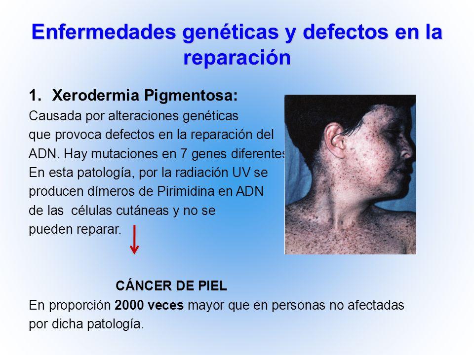 Enfermedades genéticas y defectos en la reparación 1.Xerodermia Pigmentosa: Causada por alteraciones genéticas que provoca defectos en la reparación d