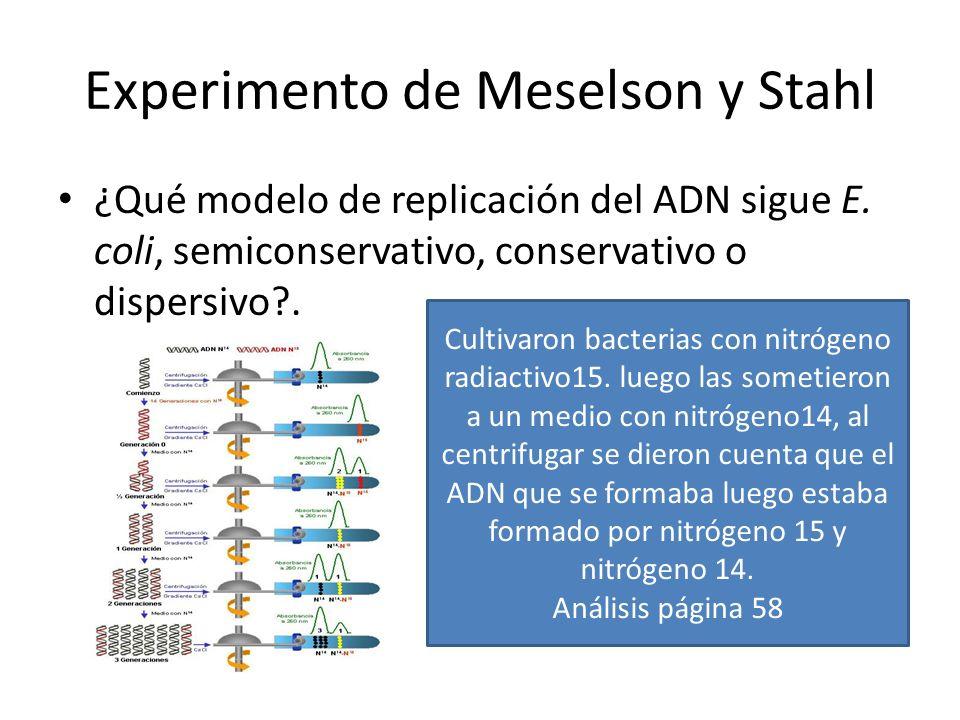 Experimento de Meselson y Stahl ¿Qué modelo de replicación del ADN sigue E.