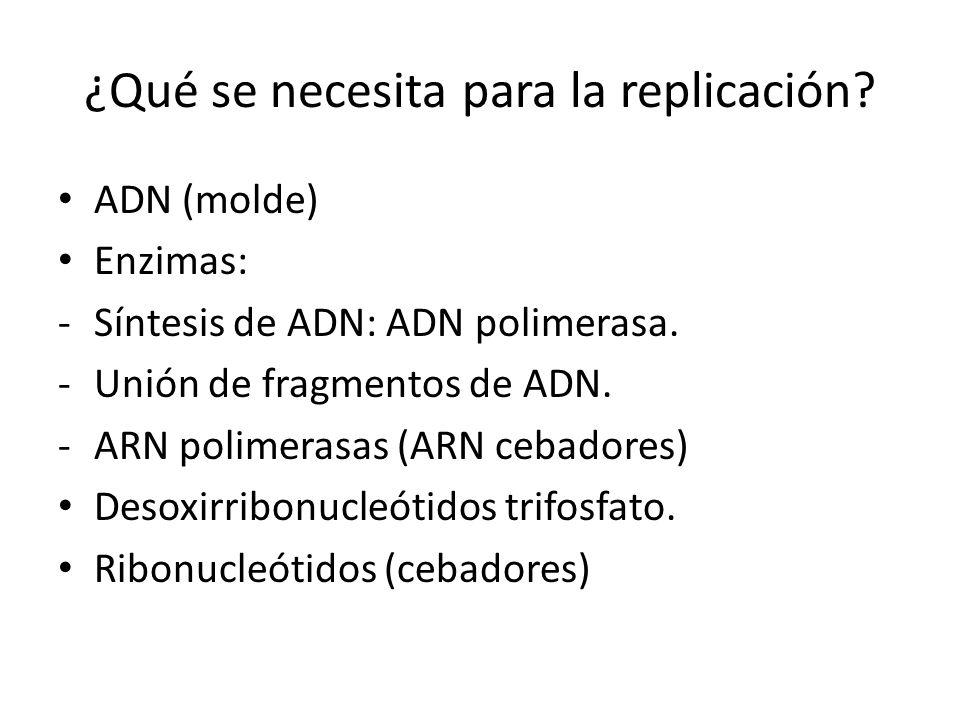 ¿Qué se necesita para la replicación.ADN (molde) Enzimas: -Síntesis de ADN: ADN polimerasa.