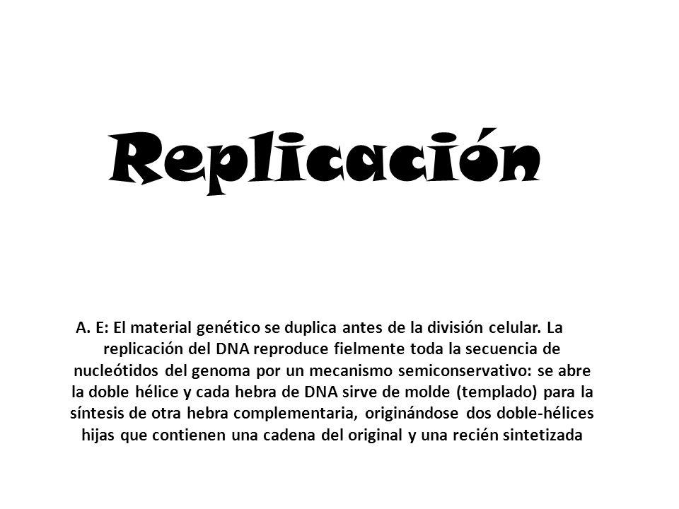 Replicación A.E: El material genético se duplica antes de la división celular.