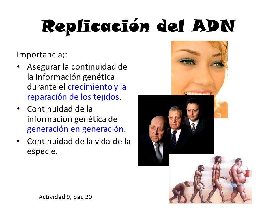 Replicación del ADN Importancia;: Asegurar la continuidad de la información genética durante el crecimiento y la reparación de los tejidos.