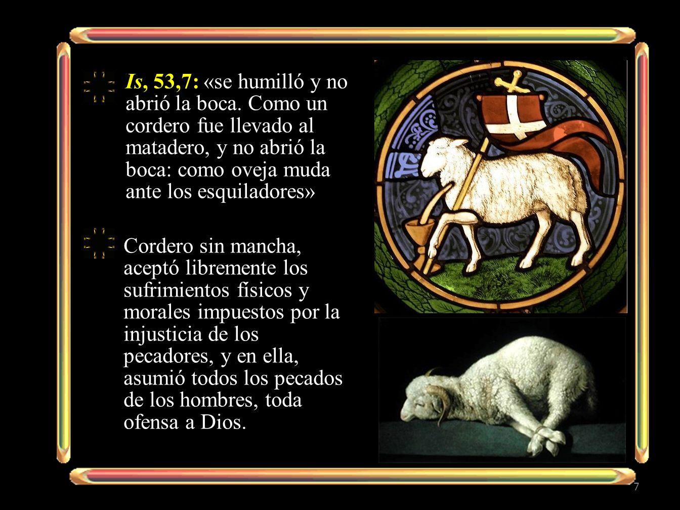 Is, 53,7: «se humilló y no abrió la boca. Como un cordero fue llevado al matadero, y no abrió la boca: como oveja muda ante los esquiladores» Cordero