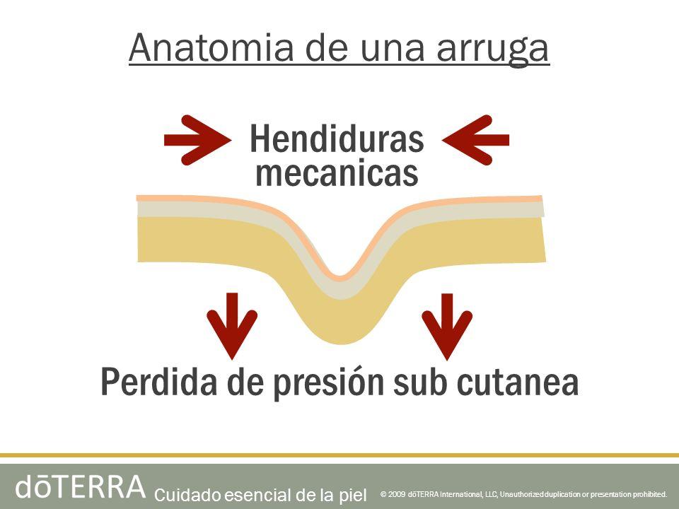 © 2009 dōTERRA International, LLC, Unauthorized duplication or presentation prohibited. Anatomia de una arruga Hendiduras mecanicas Perdida de presión