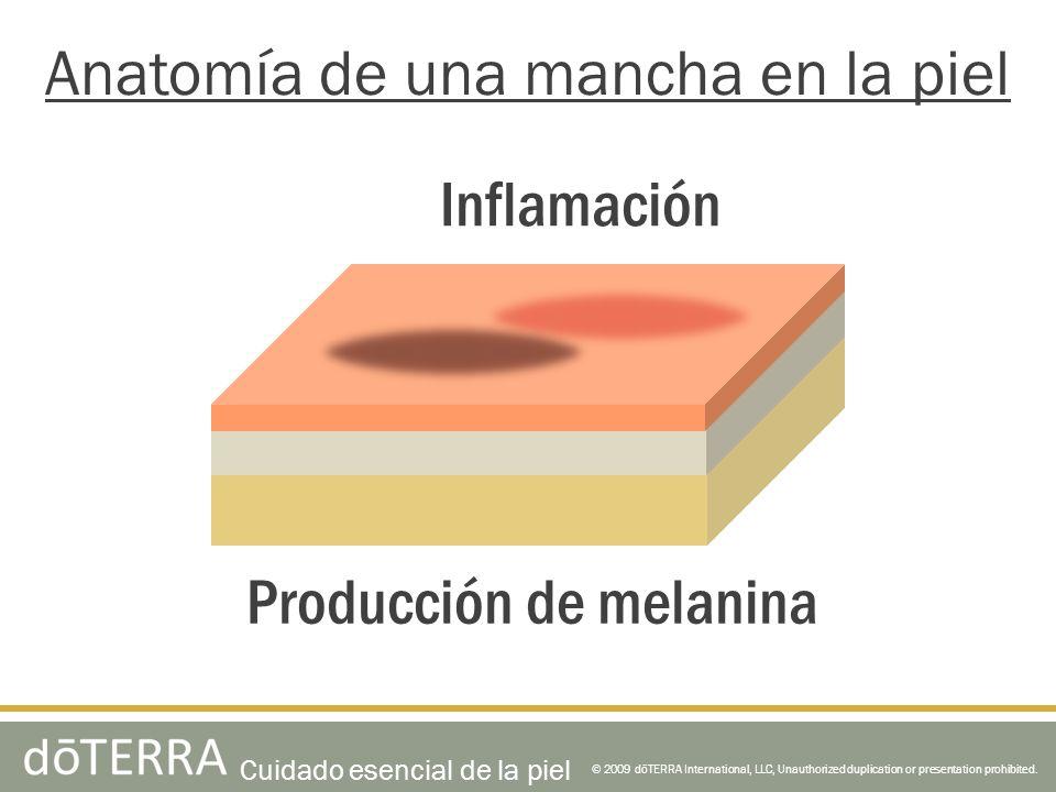© 2009 dōTERRA International, LLC, Unauthorized duplication or presentation prohibited. Anatomía de una mancha en la piel Producción de melanina Infla