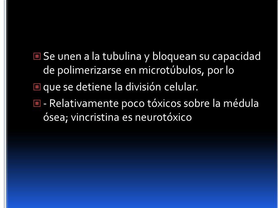 Se unen a la tubulina y bloquean su capacidad de polimerizarse en microtúbulos, por lo que se detiene la división celular. - Relativamente poco tóxico