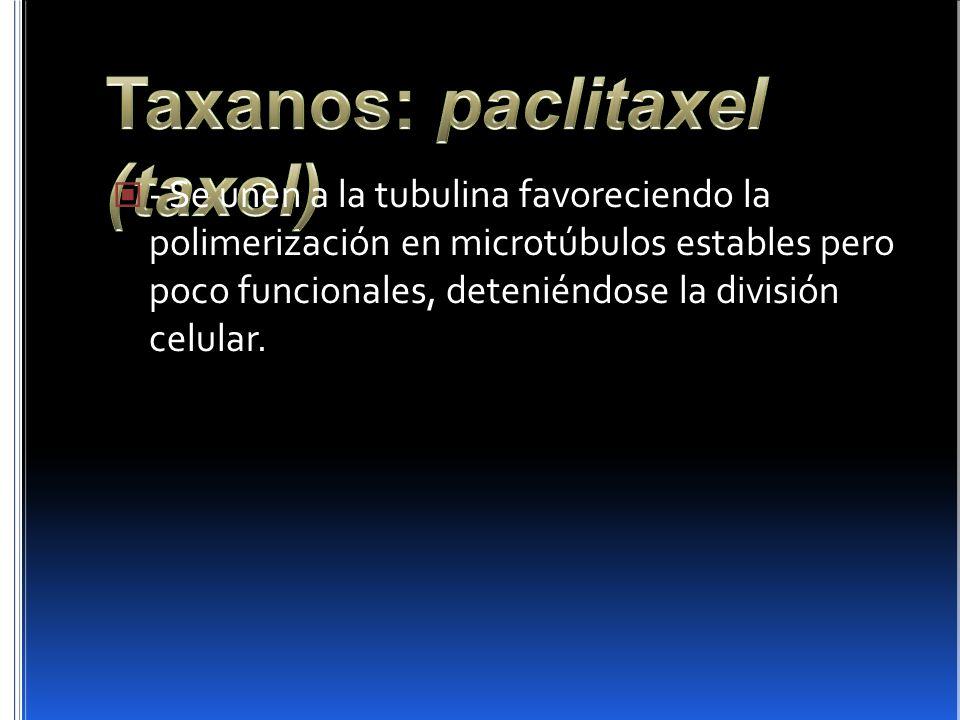 - Se unen a la tubulina favoreciendo la polimerización en microtúbulos estables pero poco funcionales, deteniéndose la división celular.