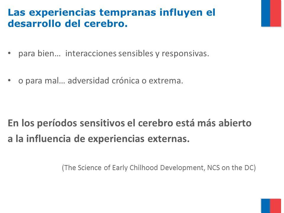 Las experiencias tempranas influyen el desarrollo del cerebro. para bien… interacciones sensibles y responsivas. o para mal… adversidad crónica o extr