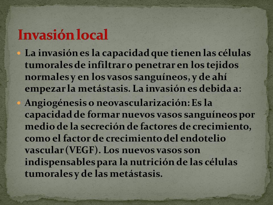 La invasión es la capacidad que tienen las células tumorales de infiltrar o penetrar en los tejidos normales y en los vasos sanguíneos, y de ahí empezar la metástasis.