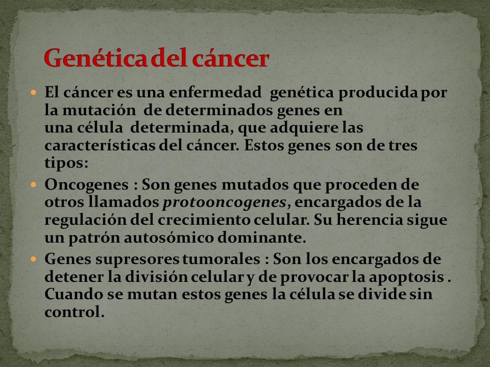El cáncer es una enfermedad genética producida por la mutación de determinados genes en una célula determinada, que adquiere las características del cáncer.