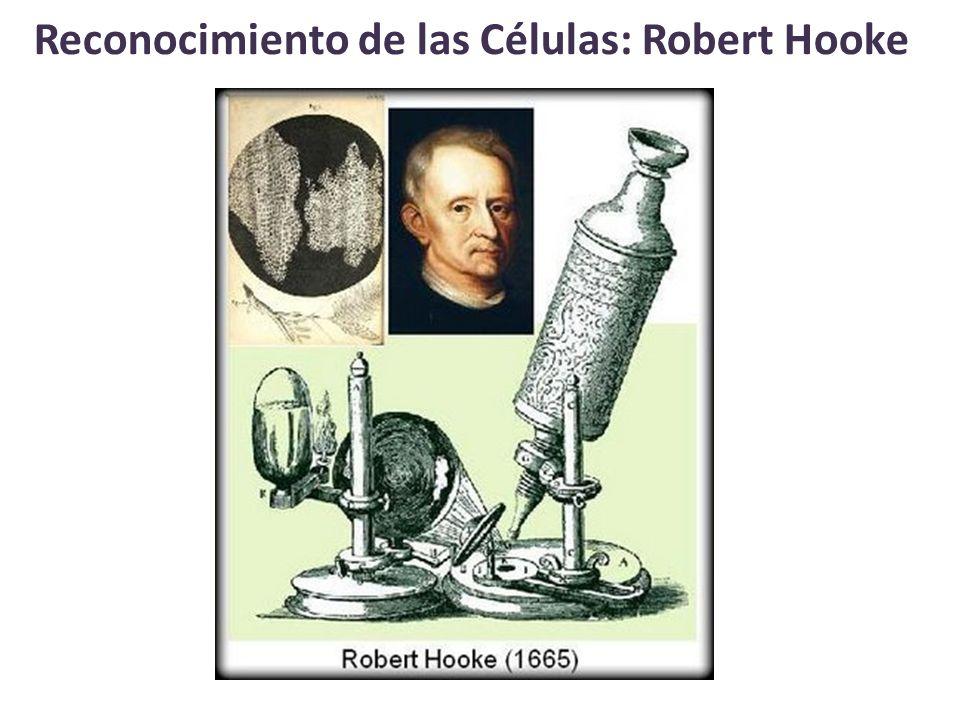 Reconocimiento de las Células: Robert Hooke