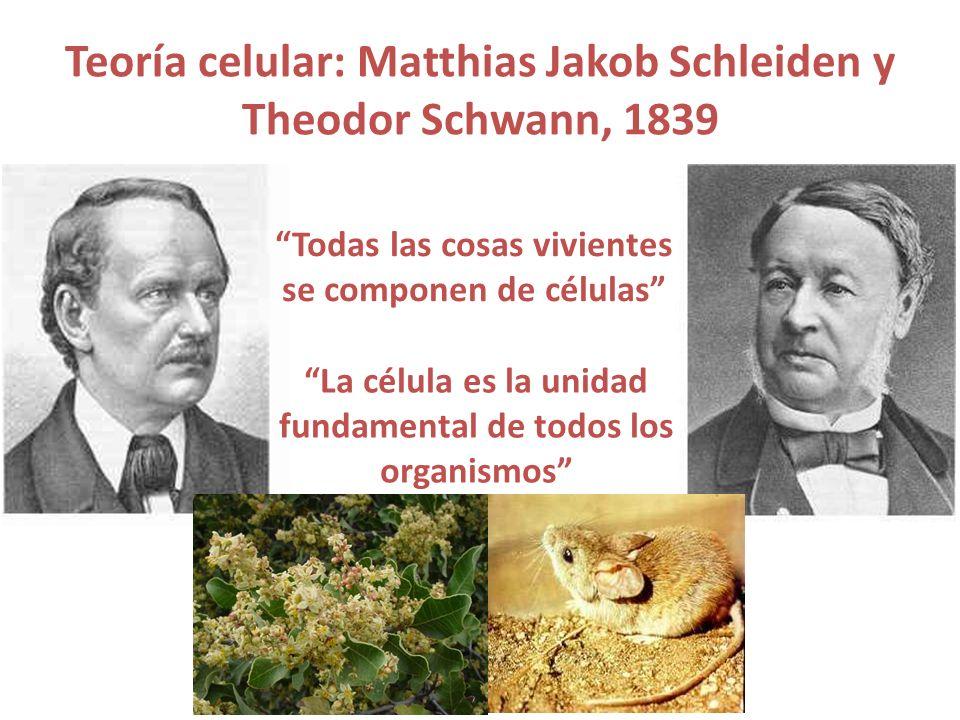 Teoría celular: Matthias Jakob Schleiden y Theodor Schwann, 1839 Todas las cosas vivientes se componen de células La célula es la unidad fundamental d