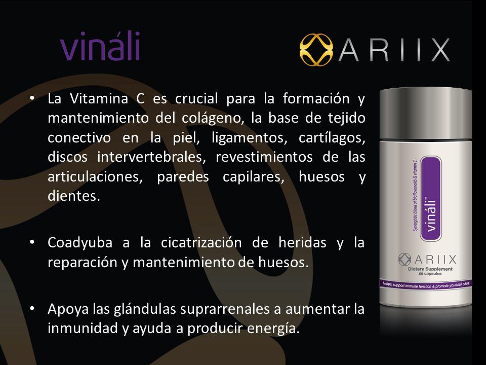 La Vitamina C es crucial para la formación y mantenimiento del colágeno, la base de tejido conectivo en la piel, ligamentos, cartílagos, discos interv