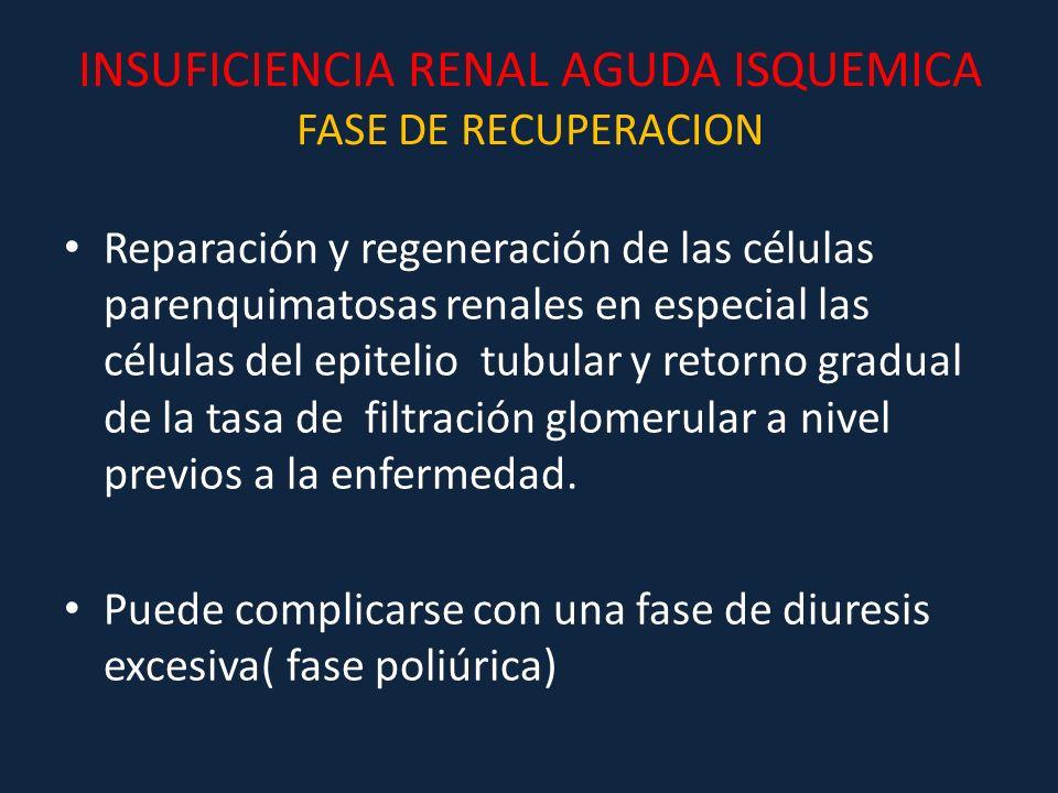 INSUFICIENCIA RENAL AGUDA ISQUEMICA FASE DE RECUPERACION Reparación y regeneración de las células parenquimatosas renales en especial las células del