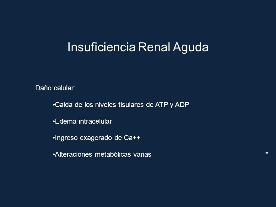 Insuficiencia Renal Aguda Daño celular: Caida de los niveles tisulares de ATP y ADP Edema intracelular Ingreso exagerado de Ca++ Alteraciones metabóli