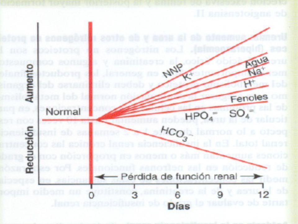 HIPERPOTASEMIA Es típico que el potasio sérico se eleve a razón de 0.5mmol/L por día en pacientes oliguricos y anuricos Asociado a un trastorno de la excreción del potasio ingerido, infundido o liberado por los tejido dañados La acidosis metabolica;favorece la salida del potasio de la célula Las cifras altas ( mayor de 6 mmol/l); anomalías electrocardiográficas, aumento de la excitabilidad cardiaca o ambas