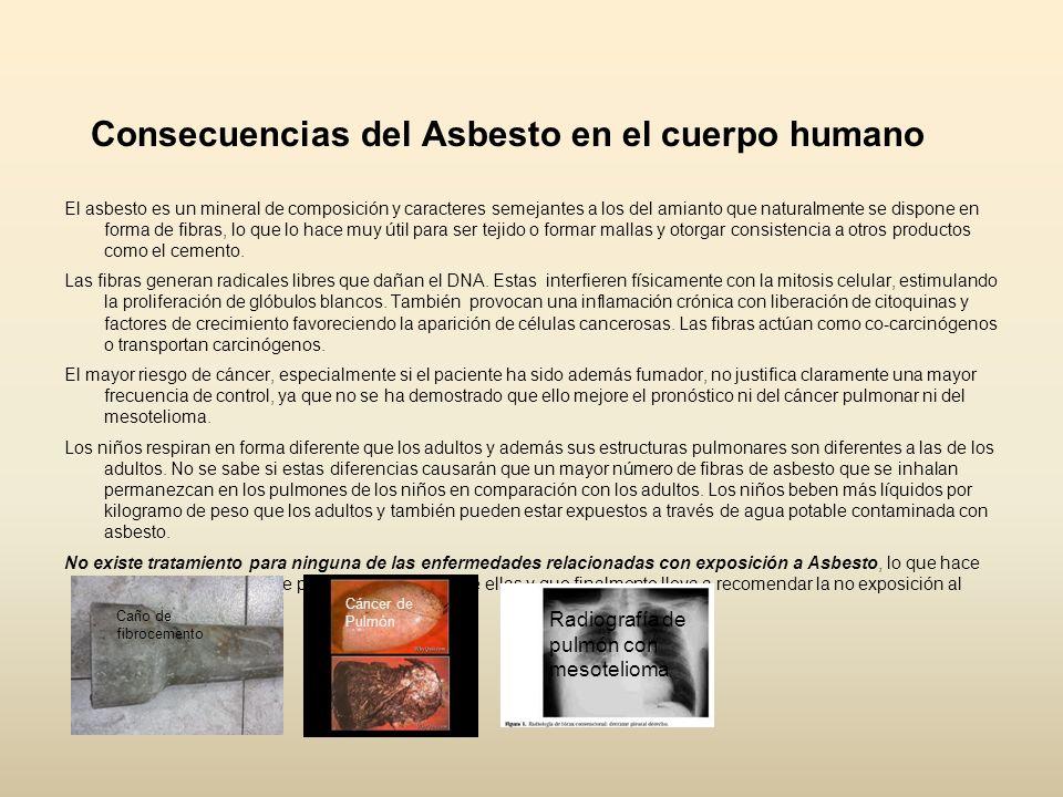 Consecuencias del Asbesto en el cuerpo humano El asbesto es un mineral de composición y caracteres semejantes a los del amianto que naturalmente se di