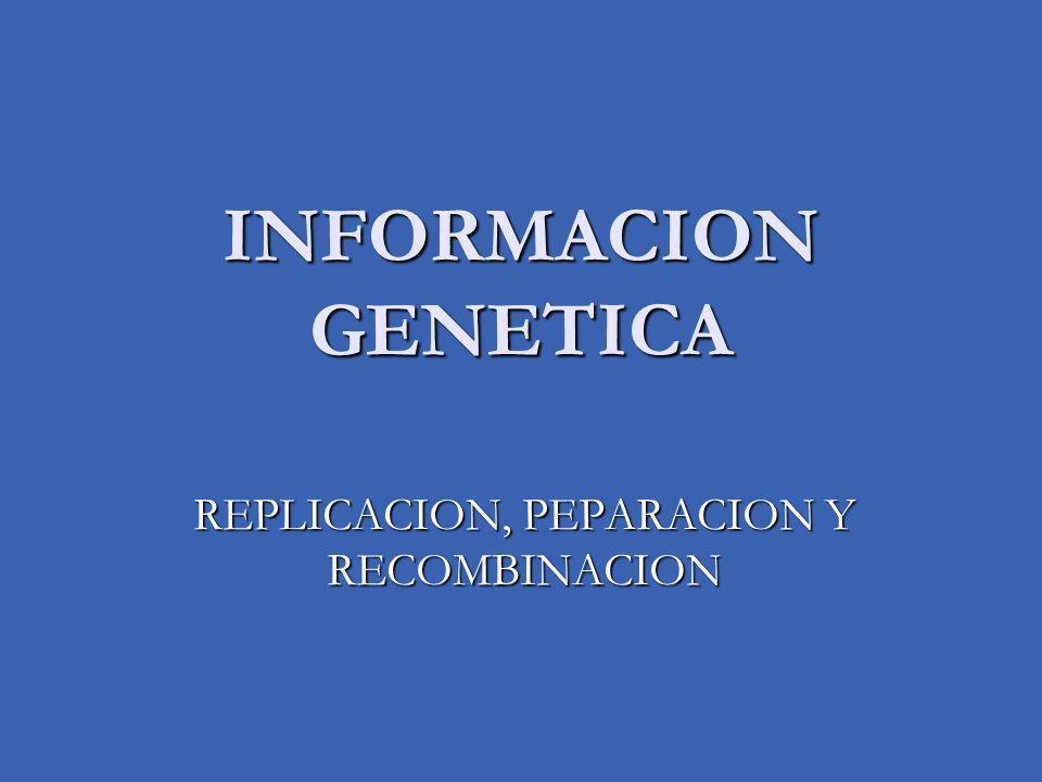 INFORMACION GENETICA Requiere de dos aspectos, dos reinos moleculares: 1.
