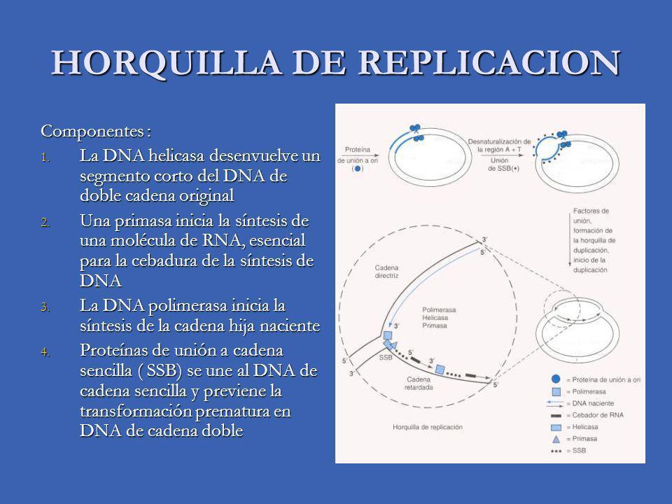 HORQUILLA DE REPLICACION Componentes : 1.