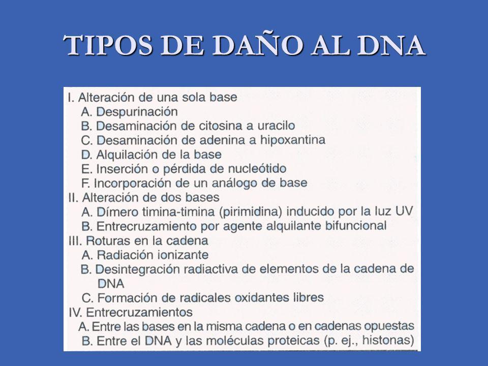 TIPOS DE DAÑO AL DNA
