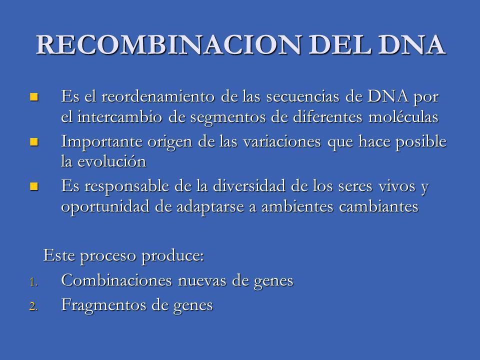 Es el reordenamiento de las secuencias de DNA por el intercambio de segmentos de diferentes moléculas Es el reordenamiento de las secuencias de DNA po