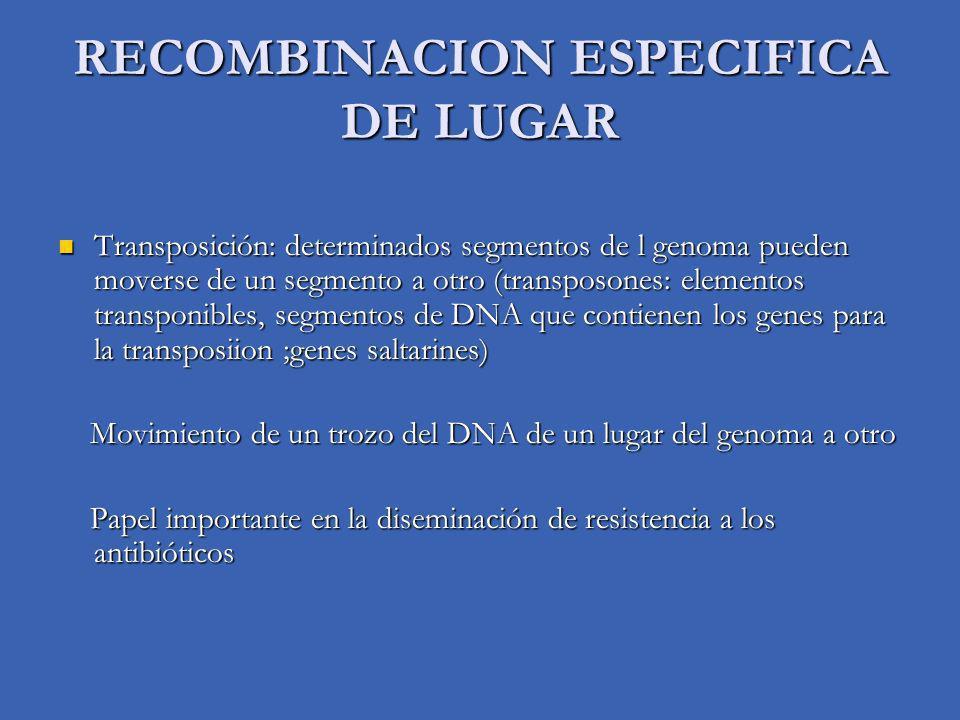RECOMBINACION ESPECIFICA DE LUGAR Transposición: determinados segmentos de l genoma pueden moverse de un segmento a otro (transposones: elementos transponibles, segmentos de DNA que contienen los genes para la transposiion ;genes saltarines) Transposición: determinados segmentos de l genoma pueden moverse de un segmento a otro (transposones: elementos transponibles, segmentos de DNA que contienen los genes para la transposiion ;genes saltarines) Movimiento de un trozo del DNA de un lugar del genoma a otro Movimiento de un trozo del DNA de un lugar del genoma a otro Papel importante en la diseminación de resistencia a los antibióticos Papel importante en la diseminación de resistencia a los antibióticos