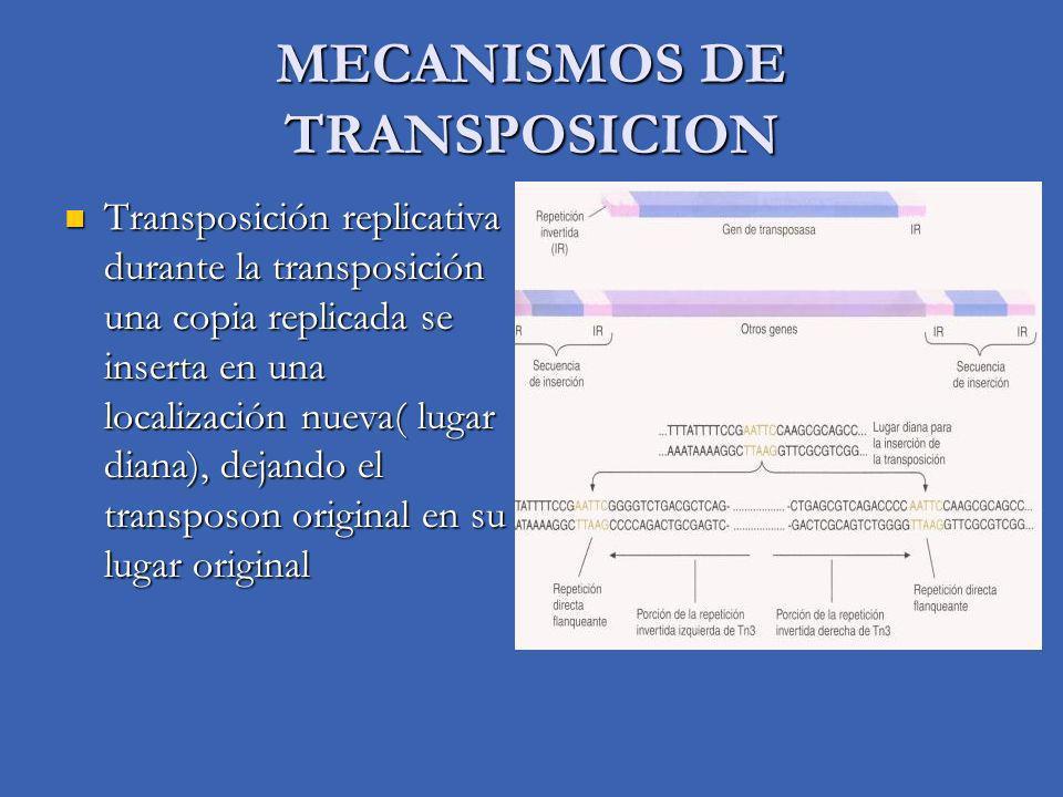 MECANISMOS DE TRANSPOSICION Transposición replicativa durante la transposición una copia replicada se inserta en una localización nueva( lugar diana),