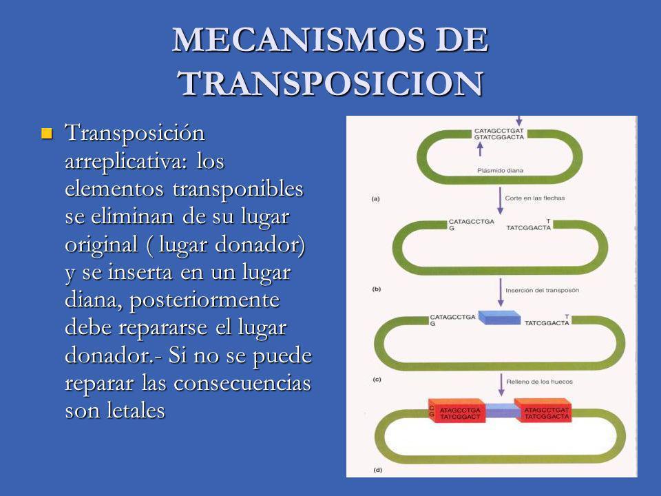 MECANISMOS DE TRANSPOSICION Transposición arreplicativa: los elementos transponibles se eliminan de su lugar original ( lugar donador) y se inserta en