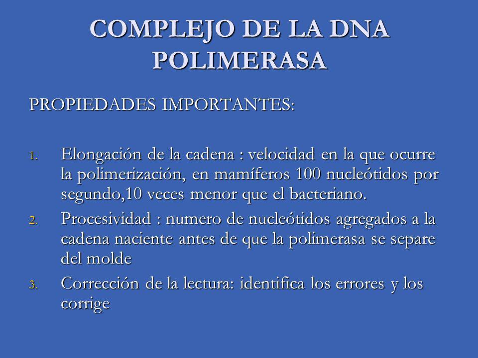 DNA POLIMERASA