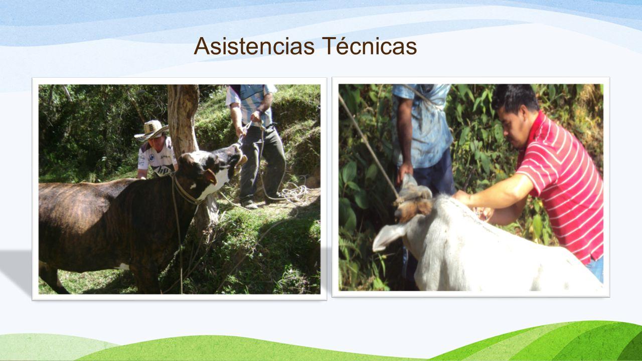 Capacitaciones En cada una de las líneas productivas se llevaron acabo capacitaciones con el fin de poder realizar un adecuado acompañamiento a los productores.