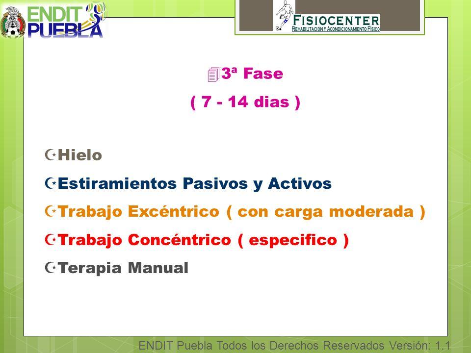 ENDIT Puebla Todos los Derechos Reservados Versión: 1.1 43ª Fase ( 7 - 14 dias ) ZHielo ZEstiramientos Pasivos y Activos ZTrabajo Excéntrico ( con carga moderada ) ZTrabajo Concéntrico ( especifico ) ZTerapia Manual