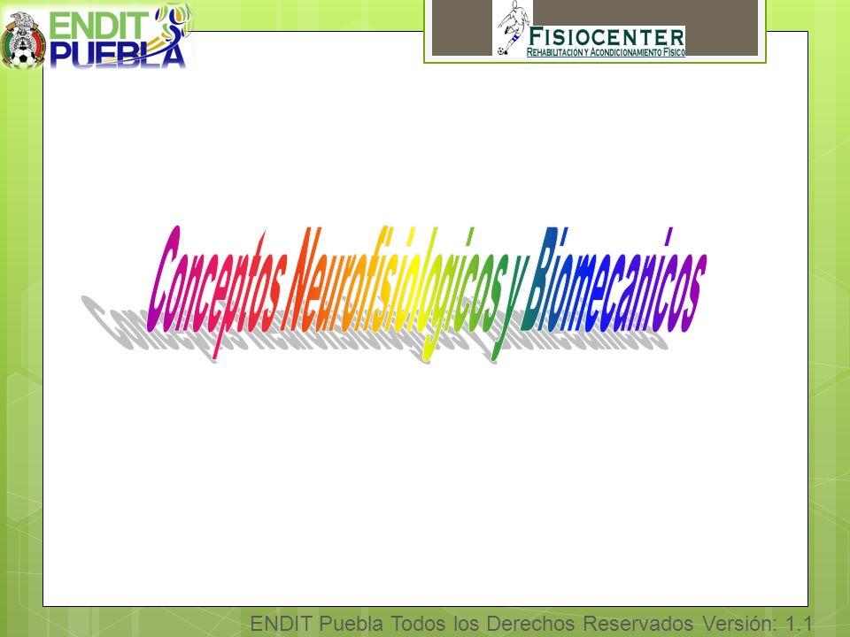 ENDIT Puebla Todos los Derechos Reservados Versión: 1.1 4Objetivos Del edema y dolor Orientar fibras de colágeno Mejorar fuerza tensil Mejorar ROM
