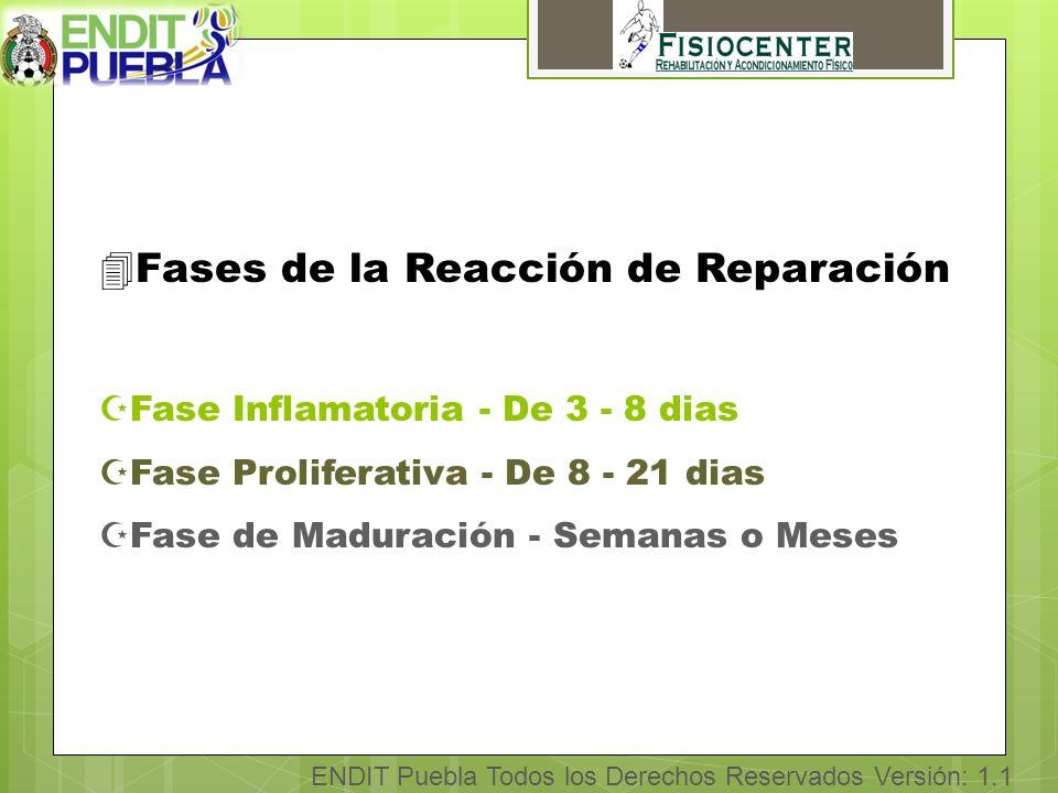 ENDIT Puebla Todos los Derechos Reservados Versión: 1.1 4Fases de la Reacción de Reparación ZFase Inflamatoria - De 3 - 8 dias ZFase Proliferativa - De 8 - 21 dias ZFase de Maduración - Semanas o Meses