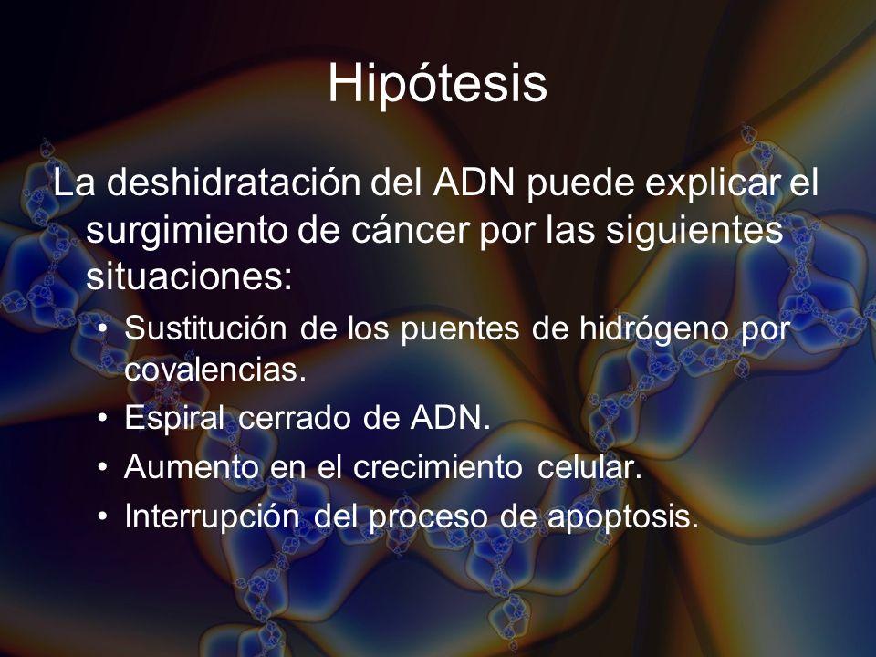 Hipótesis La deshidratación del ADN puede explicar el surgimiento de cáncer por las siguientes situaciones: Sustitución de los puentes de hidrógeno po