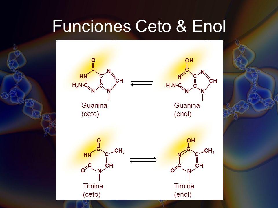 Funciones Ceto & Enol Guanina (ceto) H 2 N-C C C HN N N CH C O N N N C C OH CH C O CH 3 Timina (enol) N OH H 2 N-C C C N N CH C N Guanina (enol) Timin