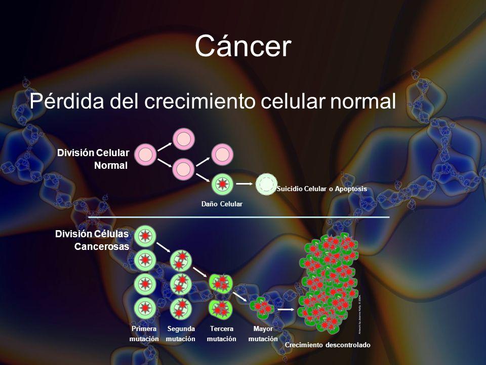 Cáncer Pérdida del crecimiento celular normal División Células Cancerosas Mayor mutación Tercera mutación Segunda mutación Primera mutación Crecimient