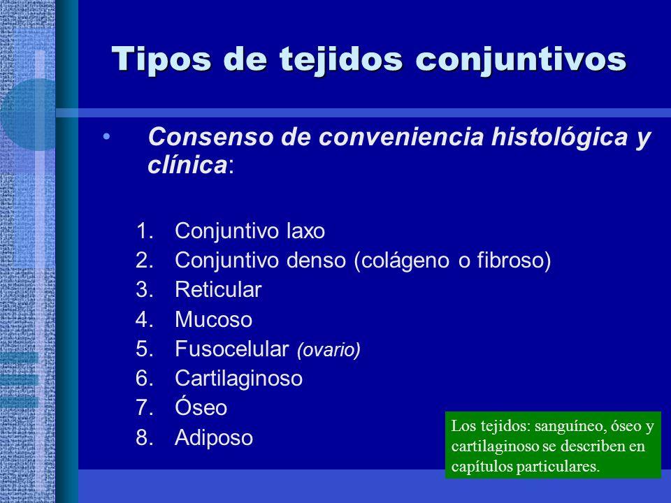 Tipos de tejidos conjuntivos Consenso de conveniencia histológica y clínica: 1.Conjuntivo laxo 2.Conjuntivo denso (colágeno o fibroso) 3.Reticular 4.Mucoso 5.Fusocelular (ovario) 6.Cartilaginoso 7.Óseo 8.Adiposo Los tejidos: sanguíneo, óseo y cartilaginoso se describen en capítulos particulares.