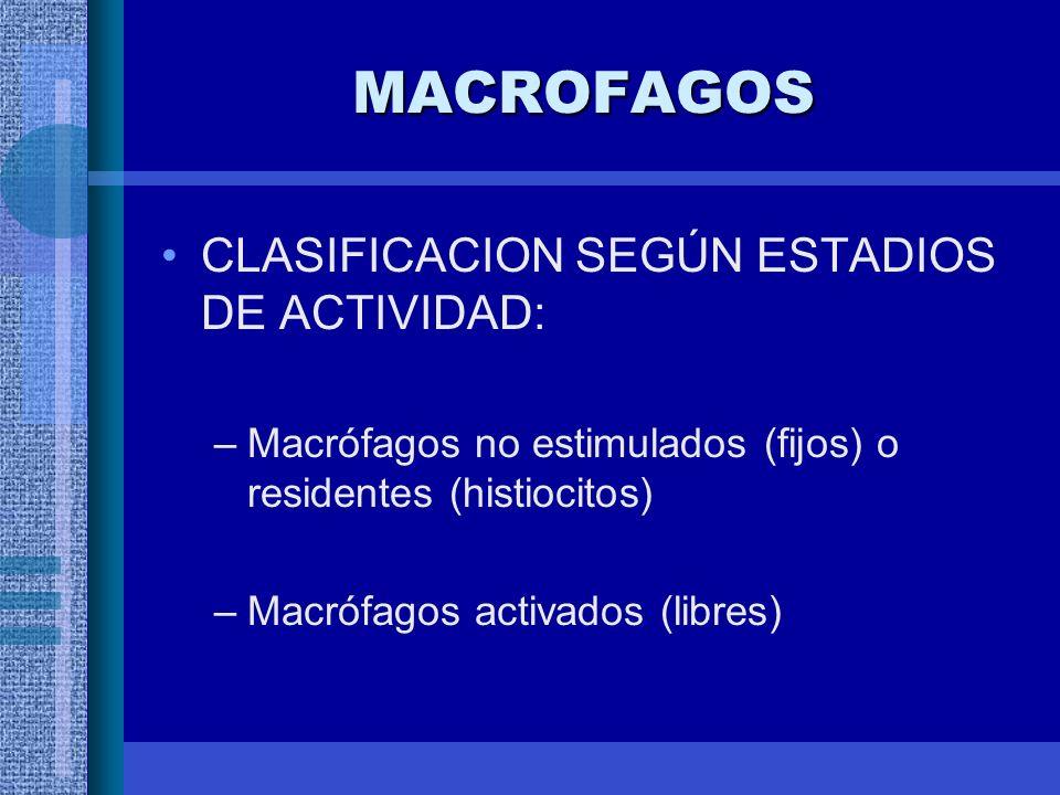 MACROFAGOS CLASIFICACION SEGÚN ESTADIOS DE ACTIVIDAD: –Macrófagos no estimulados (fijos) o residentes (histiocitos) –Macrófagos activados (libres)