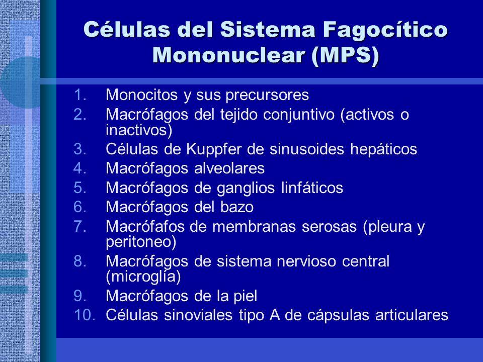 Células del Sistema Fagocítico Mononuclear (MPS) 1.Monocitos y sus precursores 2.Macrófagos del tejido conjuntivo (activos o inactivos) 3.Células de Kuppfer de sinusoides hepáticos 4.Macrófagos alveolares 5.Macrófagos de ganglios linfáticos 6.Macrófagos del bazo 7.Macrófafos de membranas serosas (pleura y peritoneo) 8.Macrófagos de sistema nervioso central (microglía) 9.Macrófagos de la piel 10.Células sinoviales tipo A de cápsulas articulares